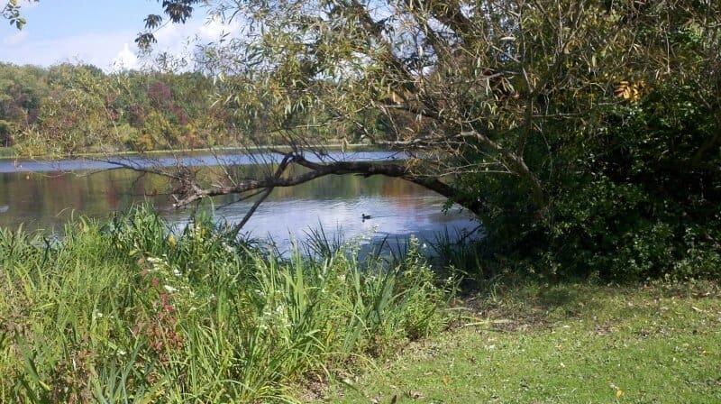 fly drone Horseshoe Lake